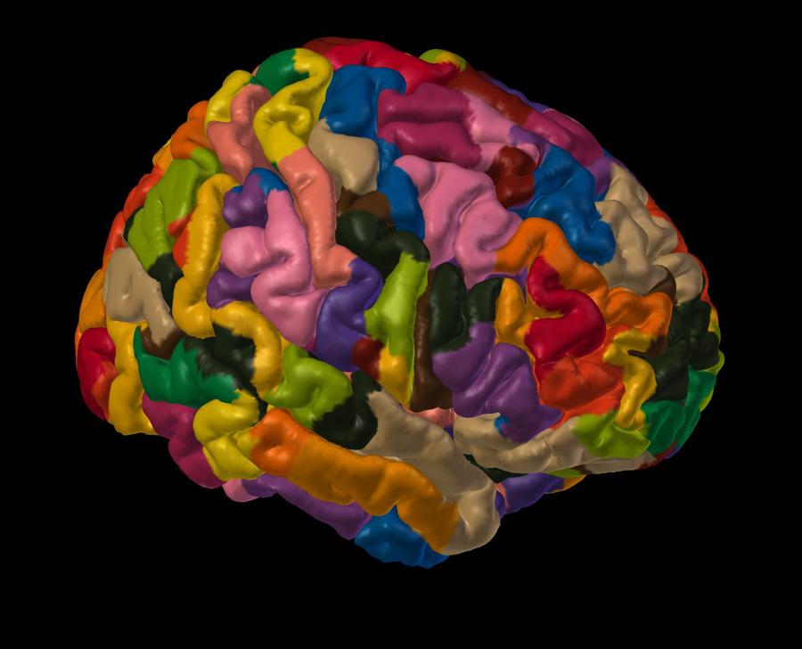 Neuroanatomy laus125 labels