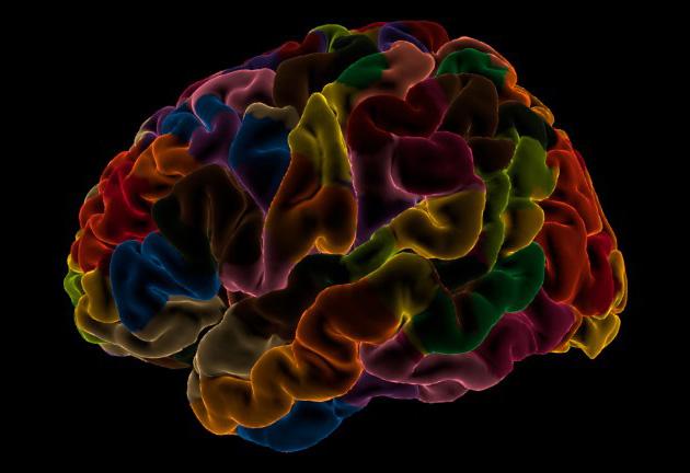 Neuroanatomy laus125 rendered labels