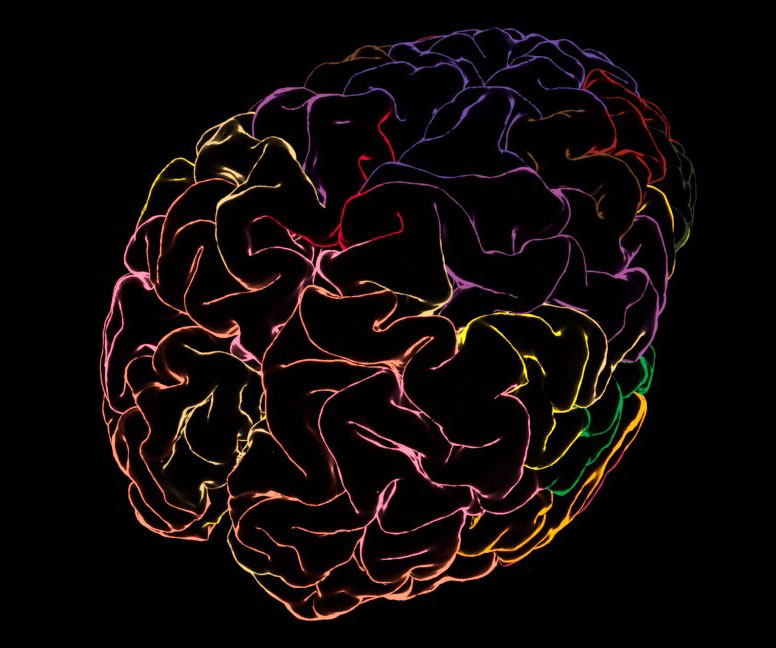Neuroanatomy laus125 transperent labels.